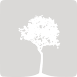 Box_Njila_GREY_tree2_